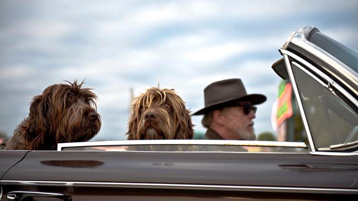 mareos-perros