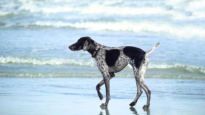 perros-playas