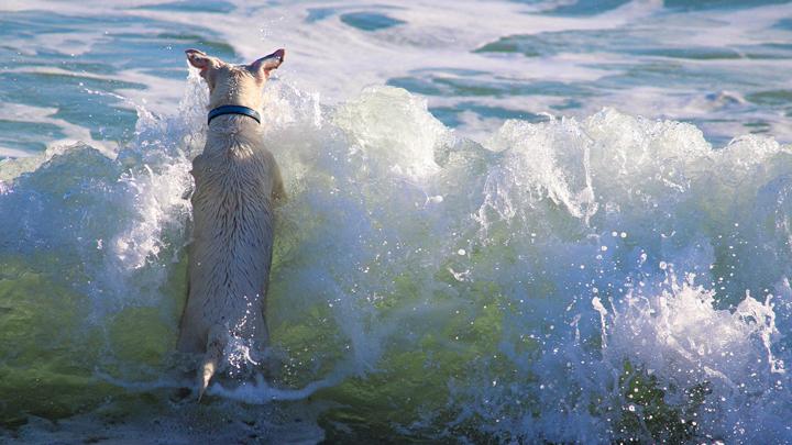 perros-medusa
