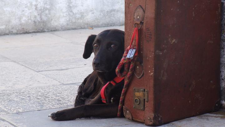perros-avion