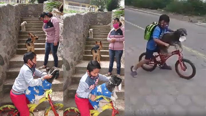 perros-mascarilla