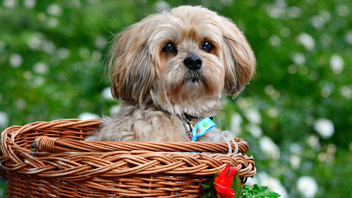 perros-amorosos