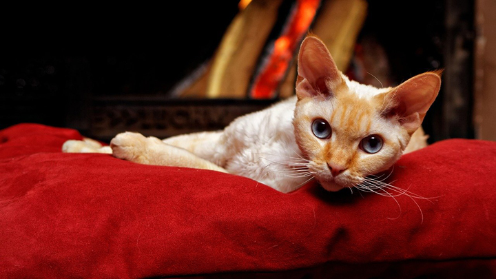 gatos-pequenos