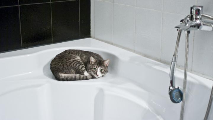 gato-higiene
