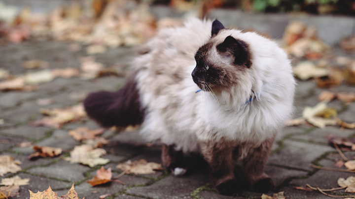 gatos-hogarenos