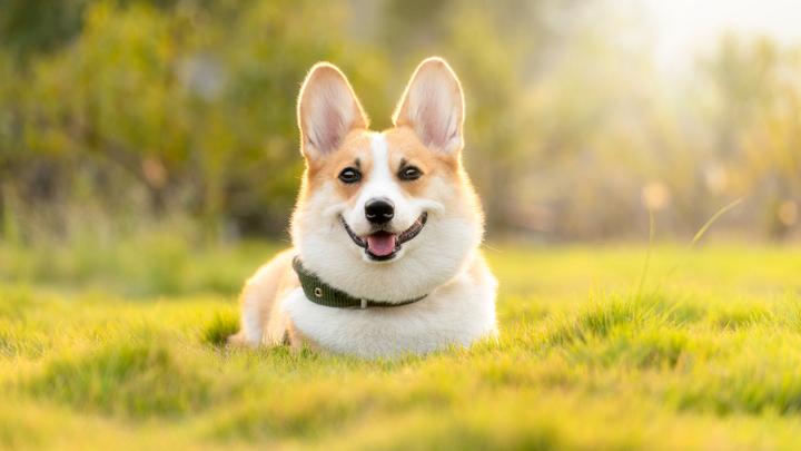 perros-reales