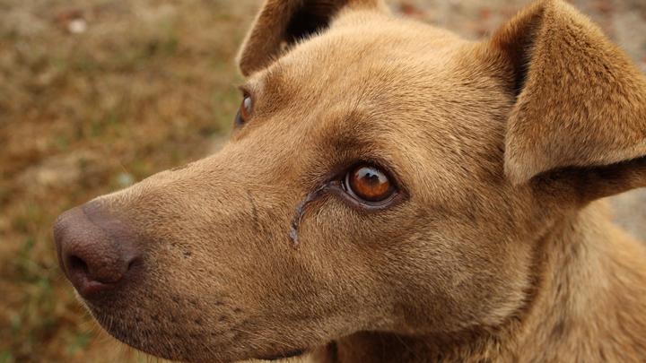 perros-luto