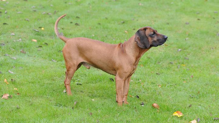 perros-primera-mascota