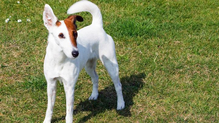 perros-razas