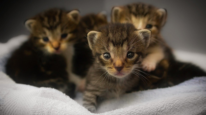 gatos-casa