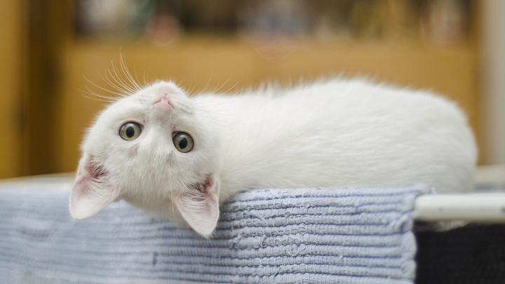 gatos-longevos