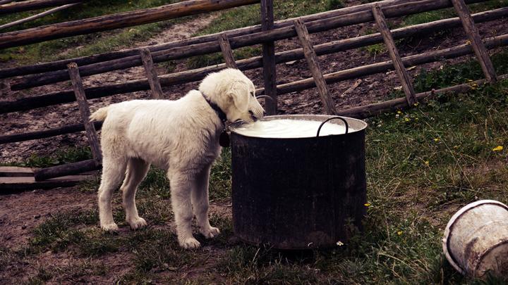 perros-comida