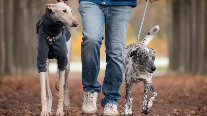 perros-correa