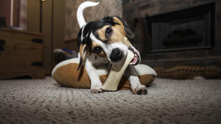 perros-huesos