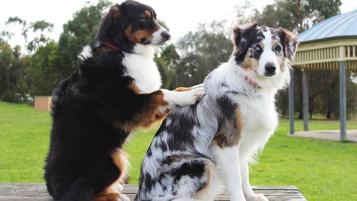 perros-masajes