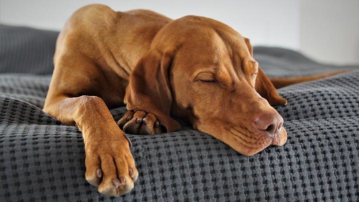 perros-posturas-dormir