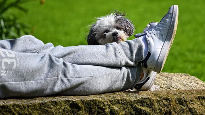 perros-pies