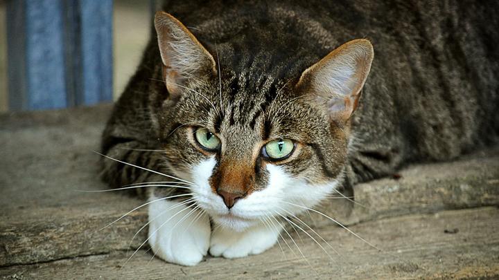gatos-odio