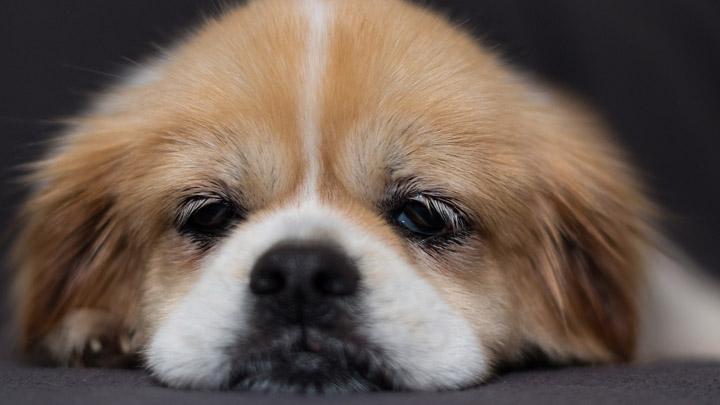 perros-aburridos