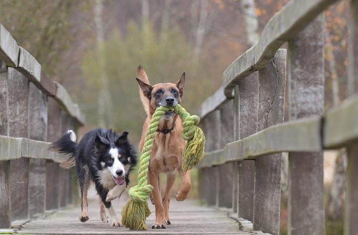 perros-en-un-puente
