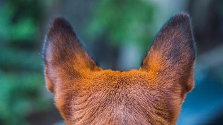 perros-mirada