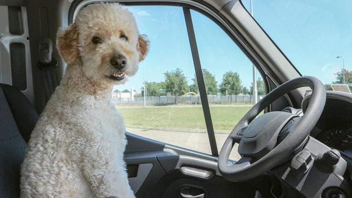 perros-viajes