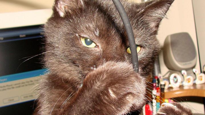 mascotas-cables
