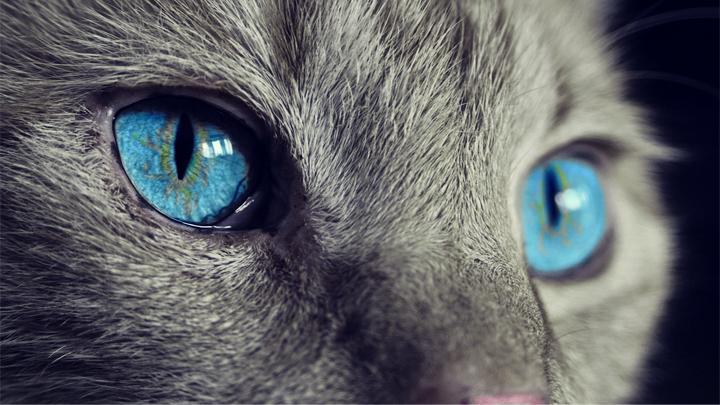 conjuntivitis-gato