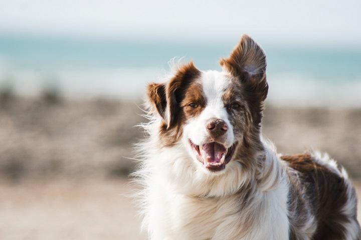 perro-contento