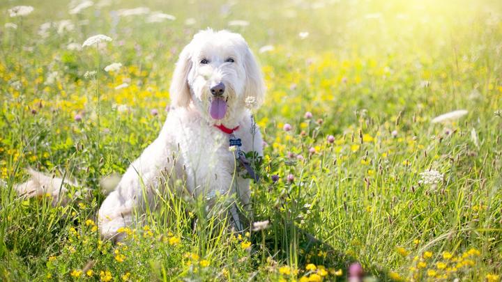 perros-flores
