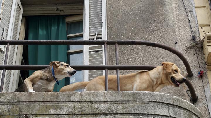 perros-ladridos