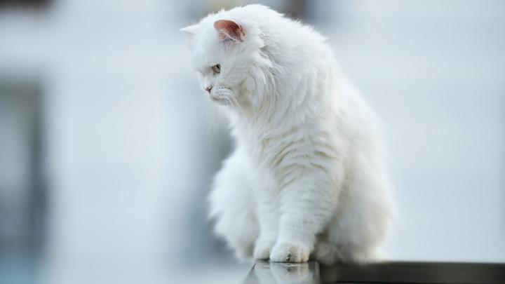 gato-balcon