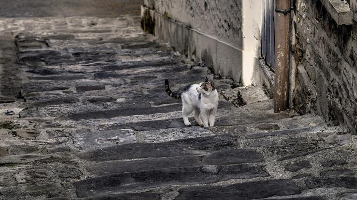 gato-callejero