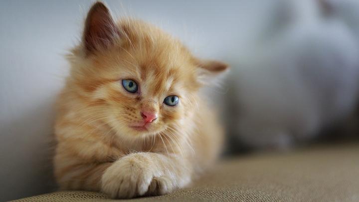 gatos-enfermos