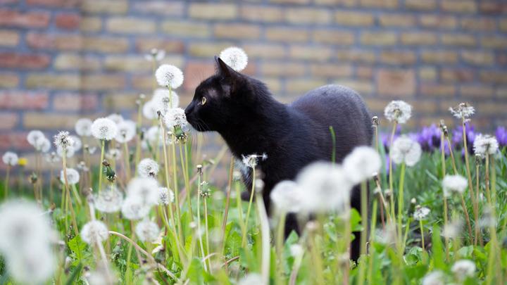 mascotas-primavera