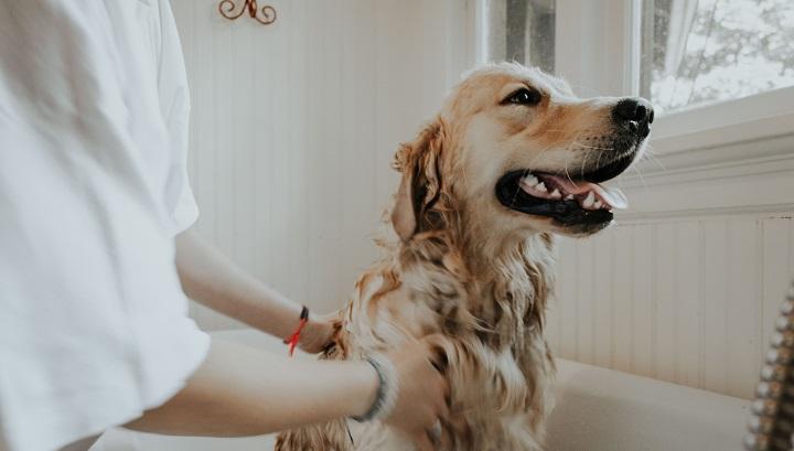 perro-banandose
