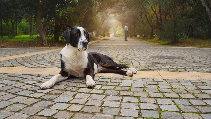 perro-grande
