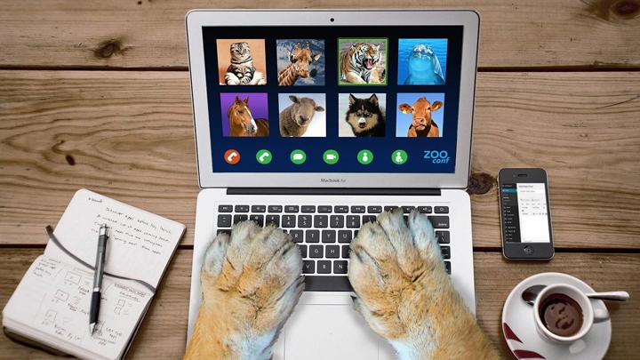 mascotas-electricidad