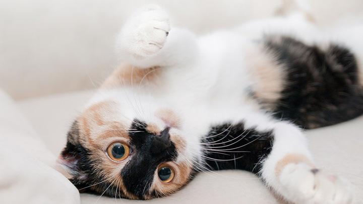 panza-gatos