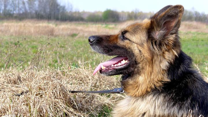perros-dientes