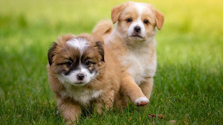 perros-patas