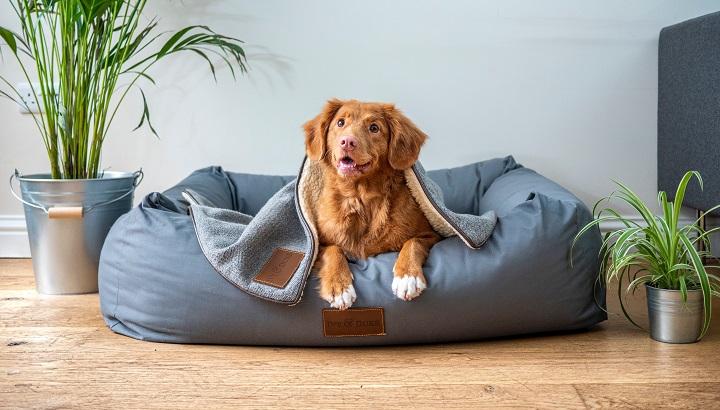 perro-en-casa