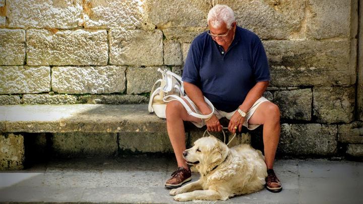 perros ancianos