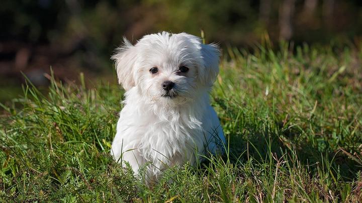 perros-pequenos